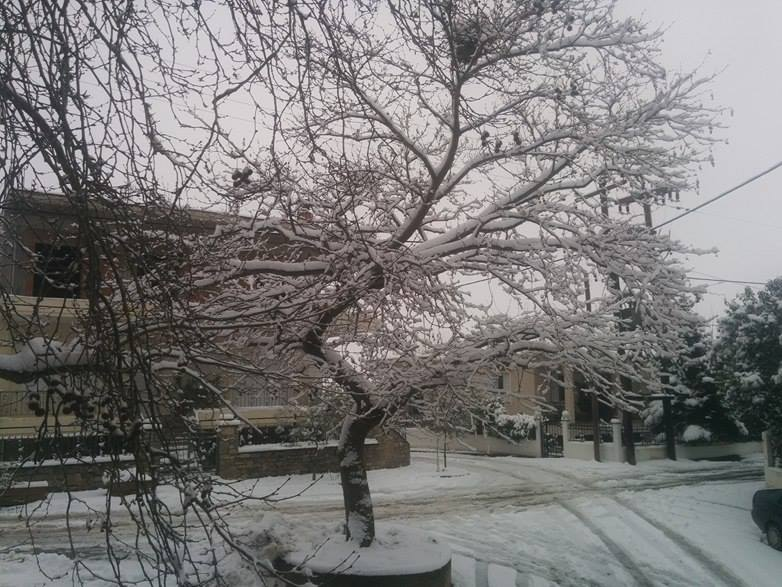 χιόνι φαρσαλα 200116