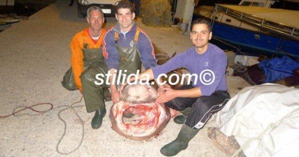 καρχαρίας φθιώτιδα 1